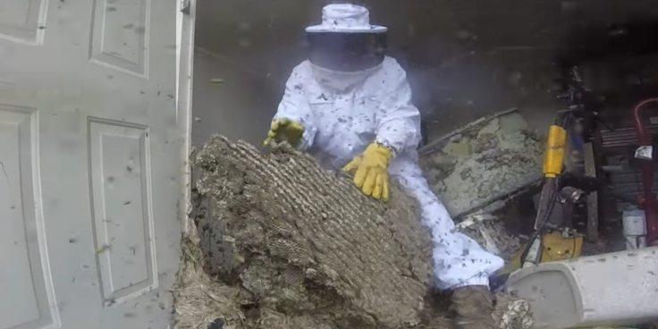 wtf hornet nest